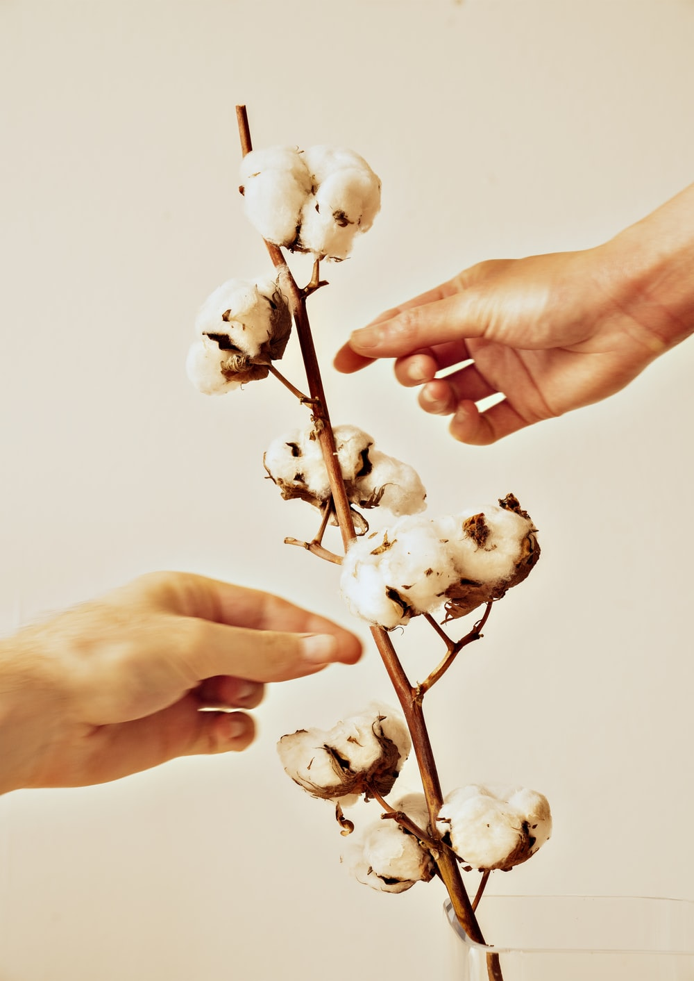 white flower buds on persons hand