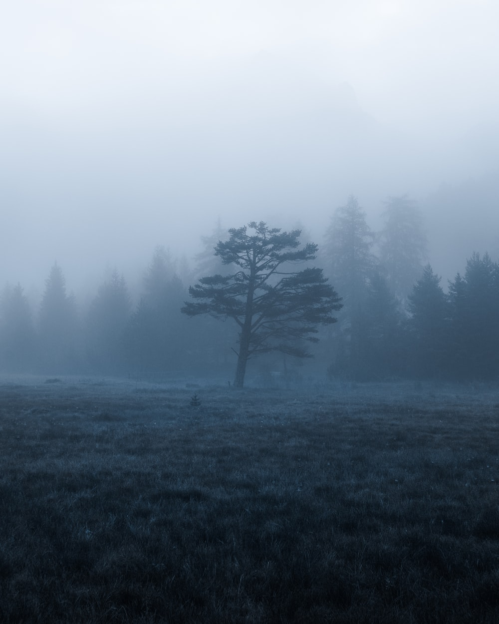 green tree on green grass field during foggy day