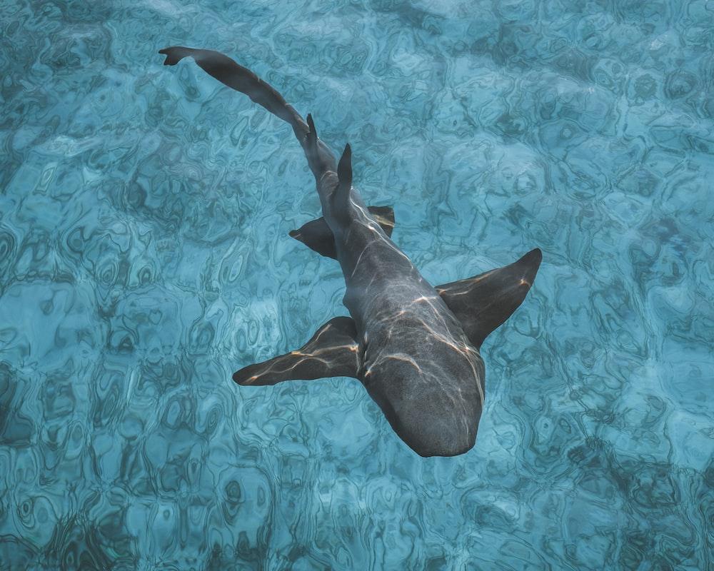 black shark on body of water