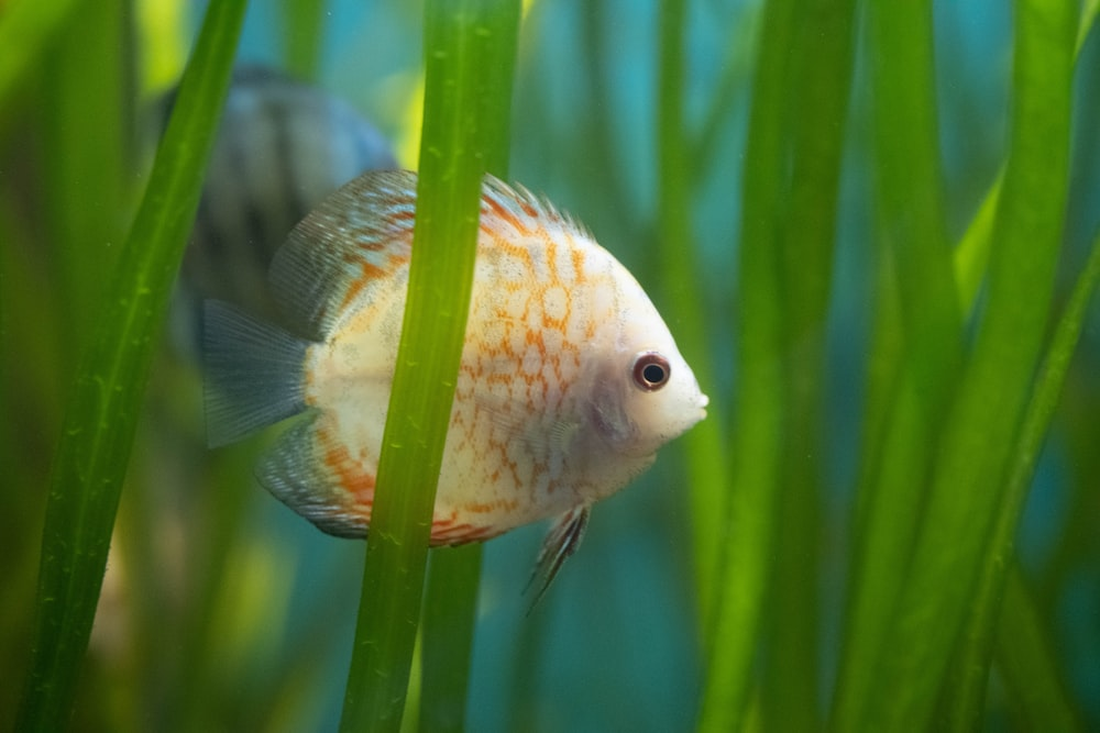 white and gray fish on green plant