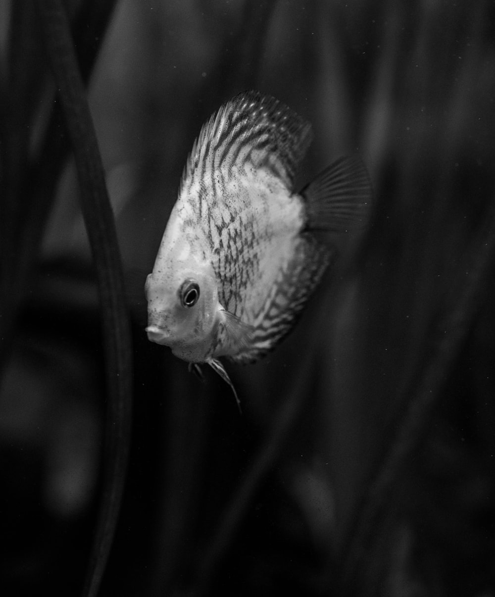 white and black spotted fish
