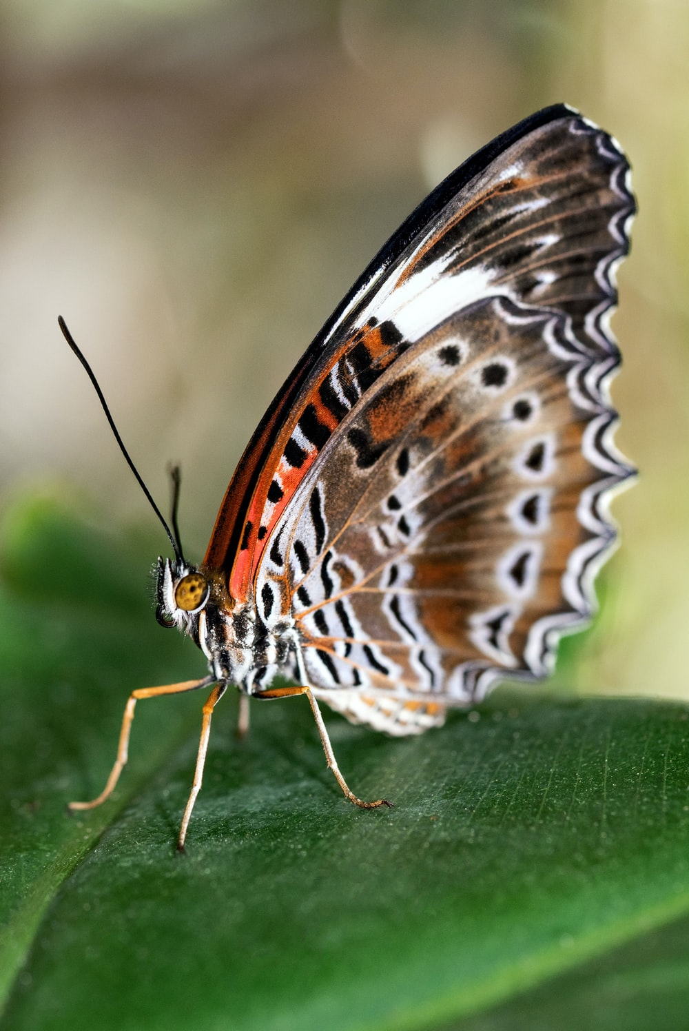 brown white and black butterfly on green leaf