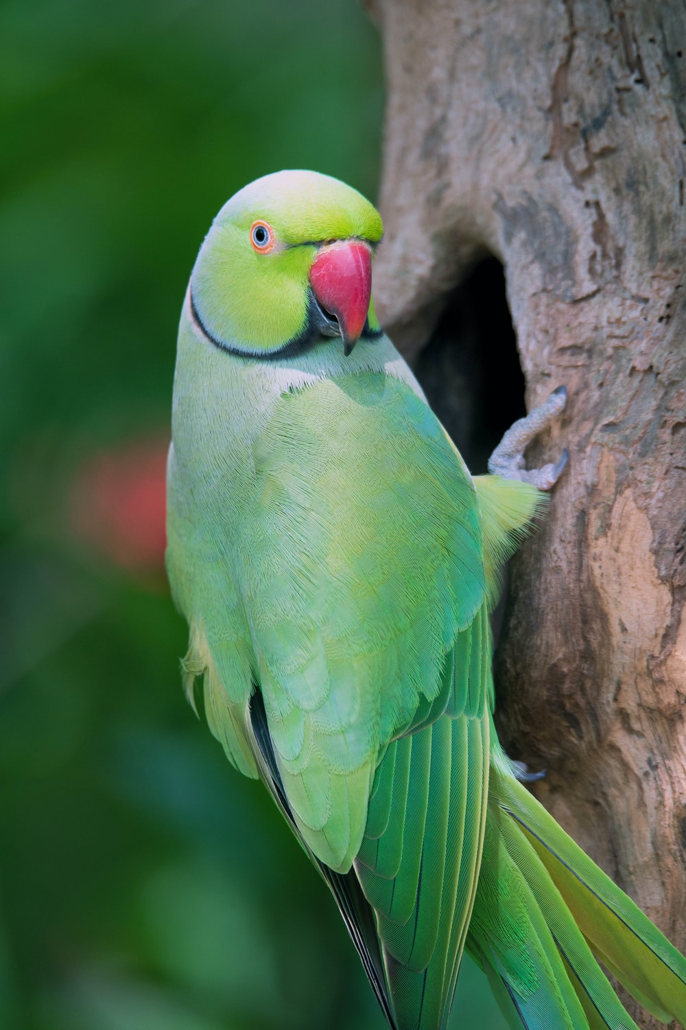 green and red bird on brown tree branch