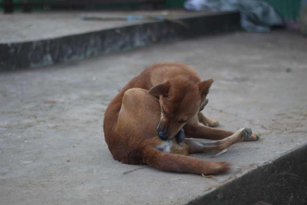 brown short coated dog lying on gray concrete floor during daytime
