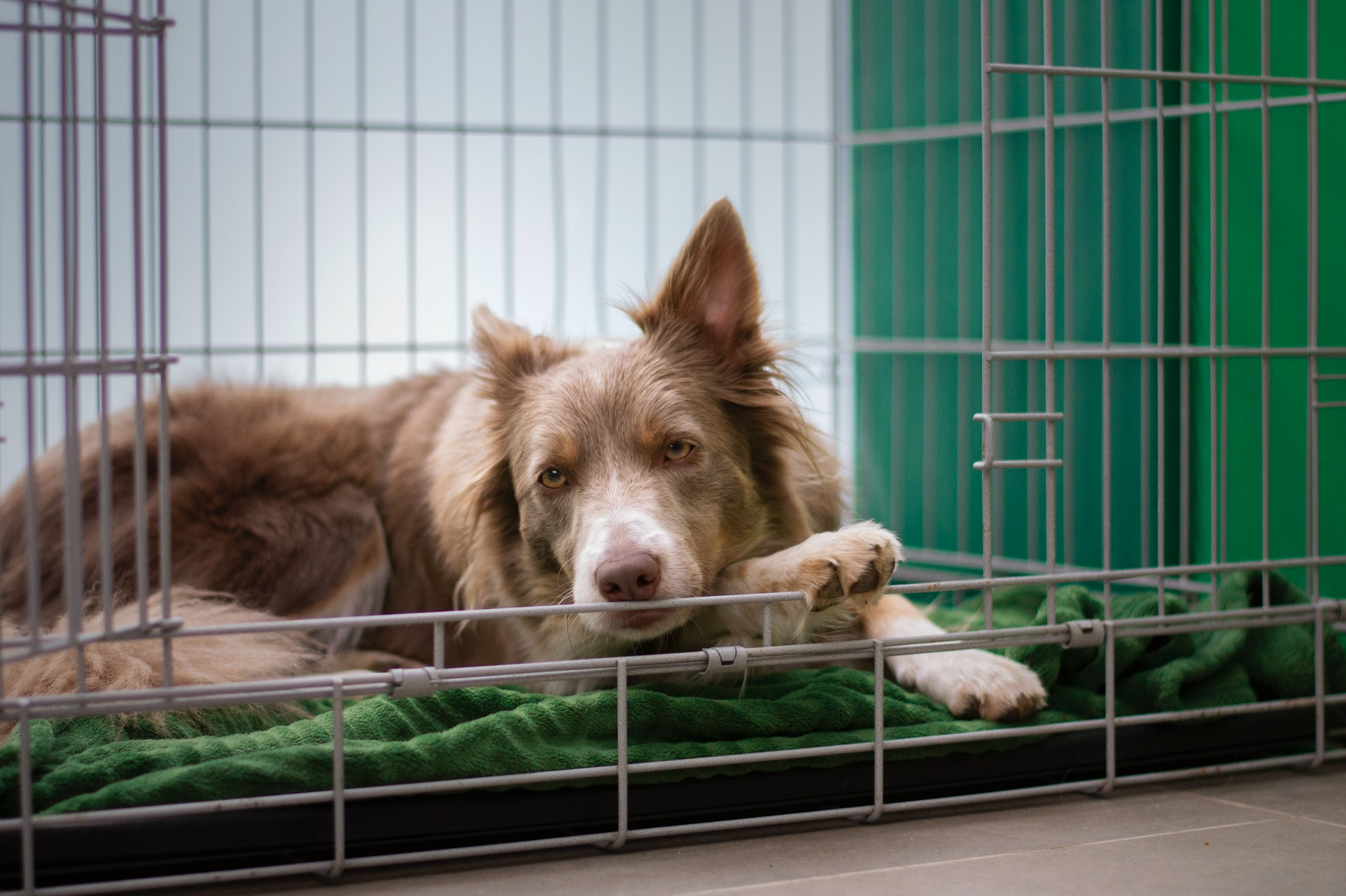 9 Easy Tips to Get Your Dog to Love Their Crate