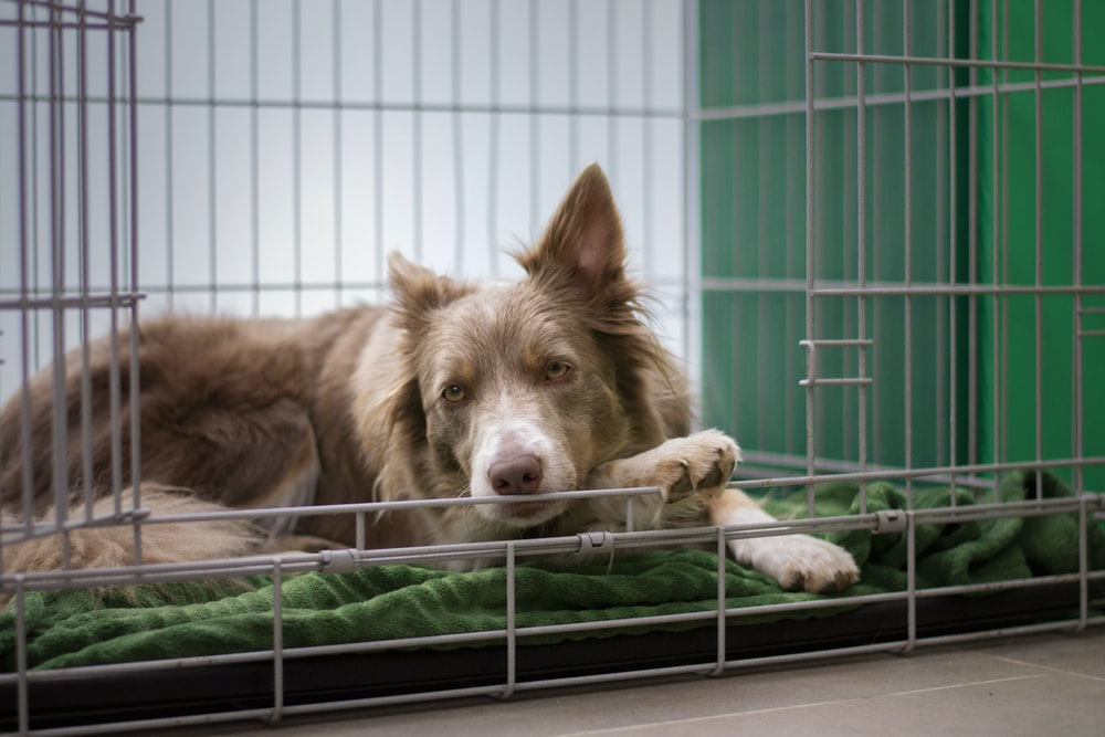 brown short coated dog lying on green metal cage