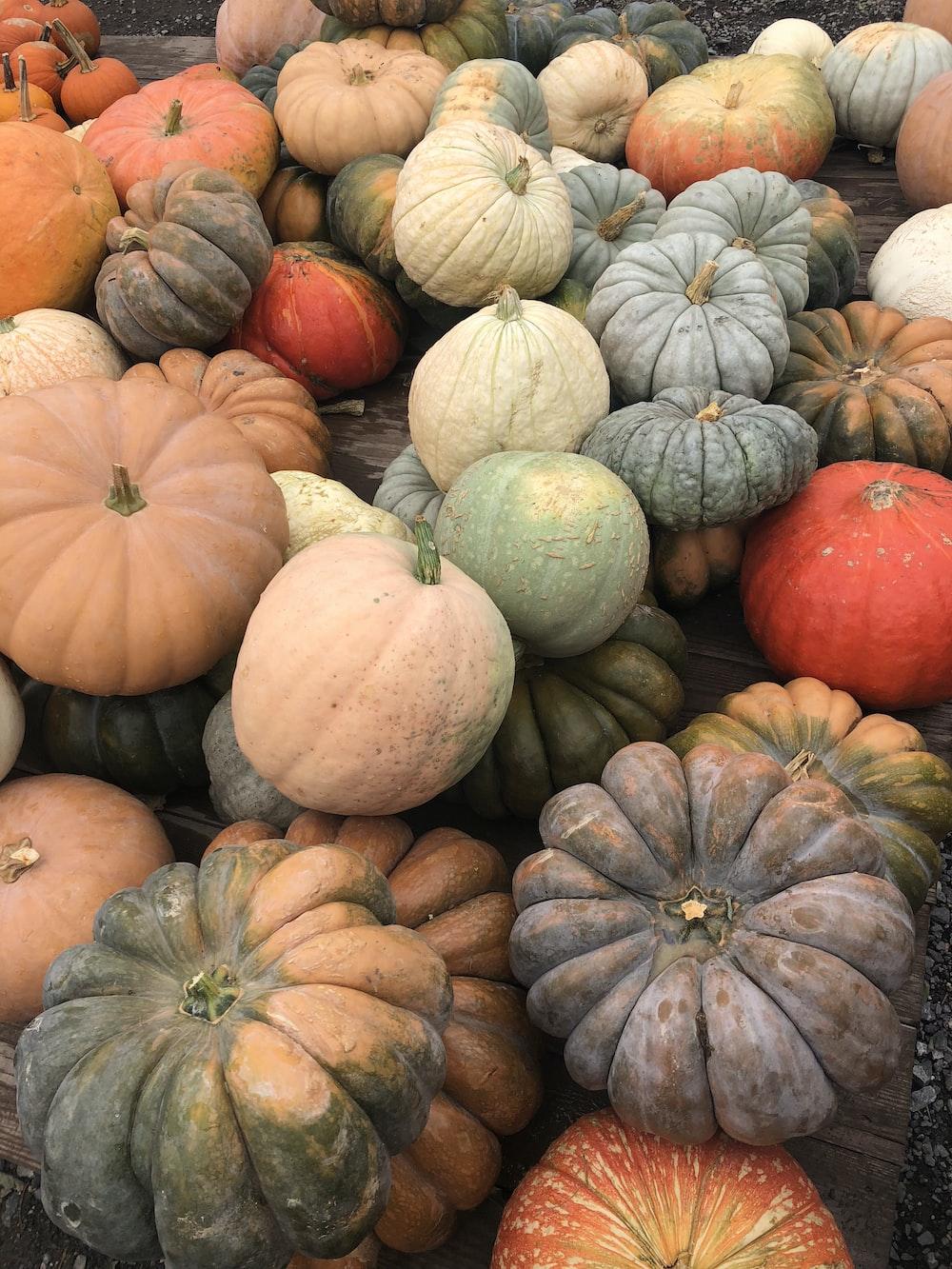 orange and green pumpkins on ground