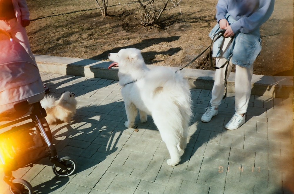 white long coated dog on gray concrete floor