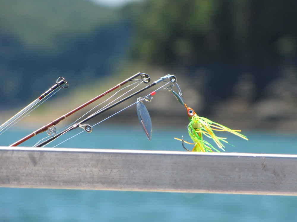 green and yellow bird on silver rod