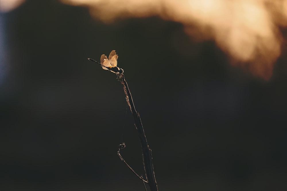 brown bird perched on brown stem in tilt shift lens