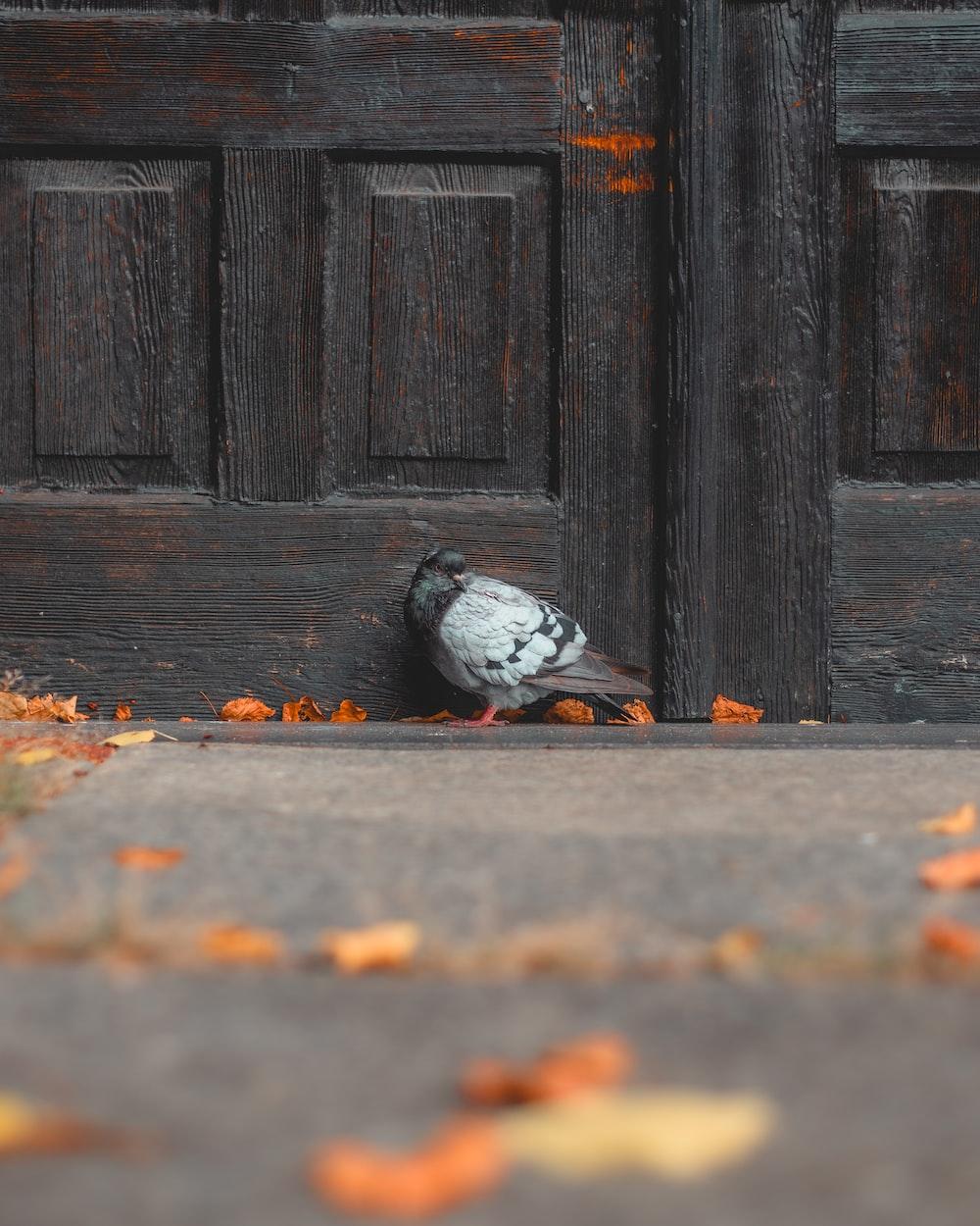 white and black bird on gray concrete floor