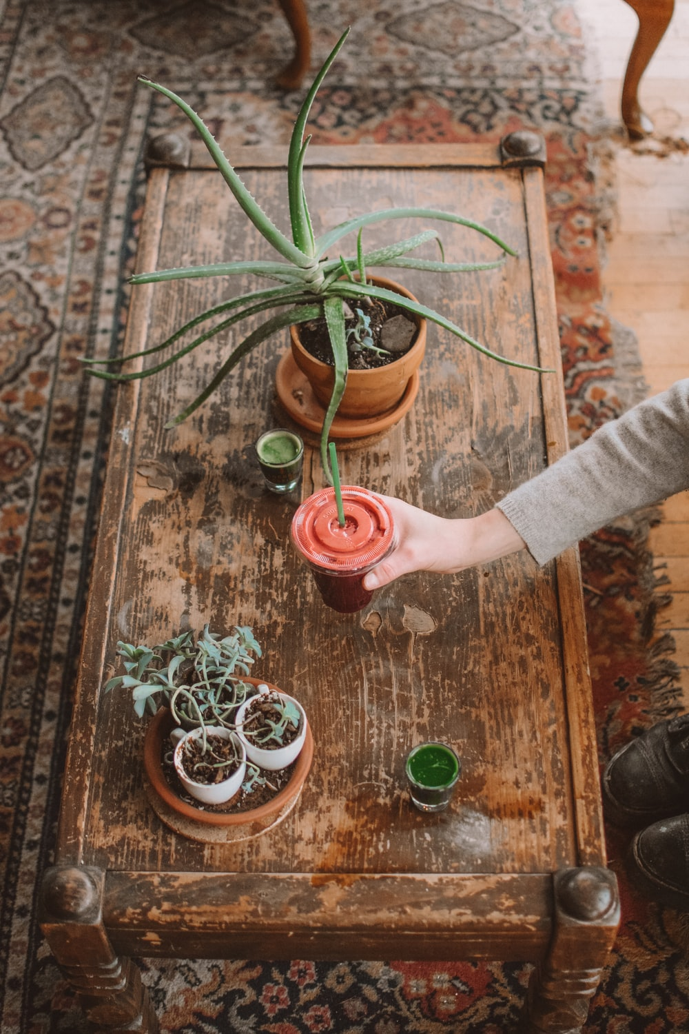 person holding green plant on brown clay pot