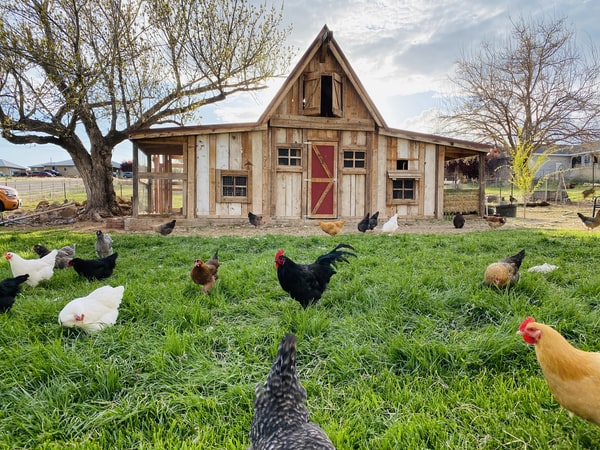 Leadership Lessons from a Chicken Coop - Todd Grover