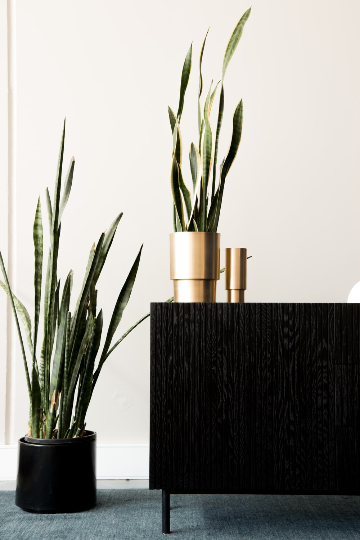green plant on black vase