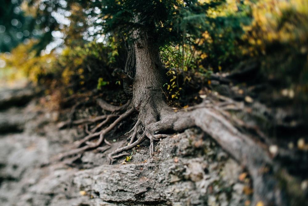 brown tree branch on gray soil during daytime