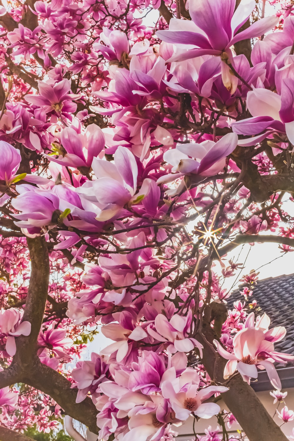 pink flowers on tree branch