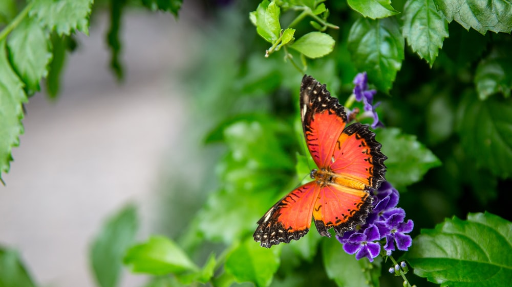 orange and black butterfly perched on purple flower in close up photography during daytime