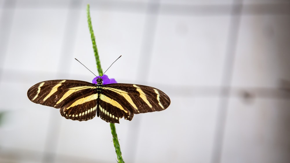 black and yellow butterfly on green plant