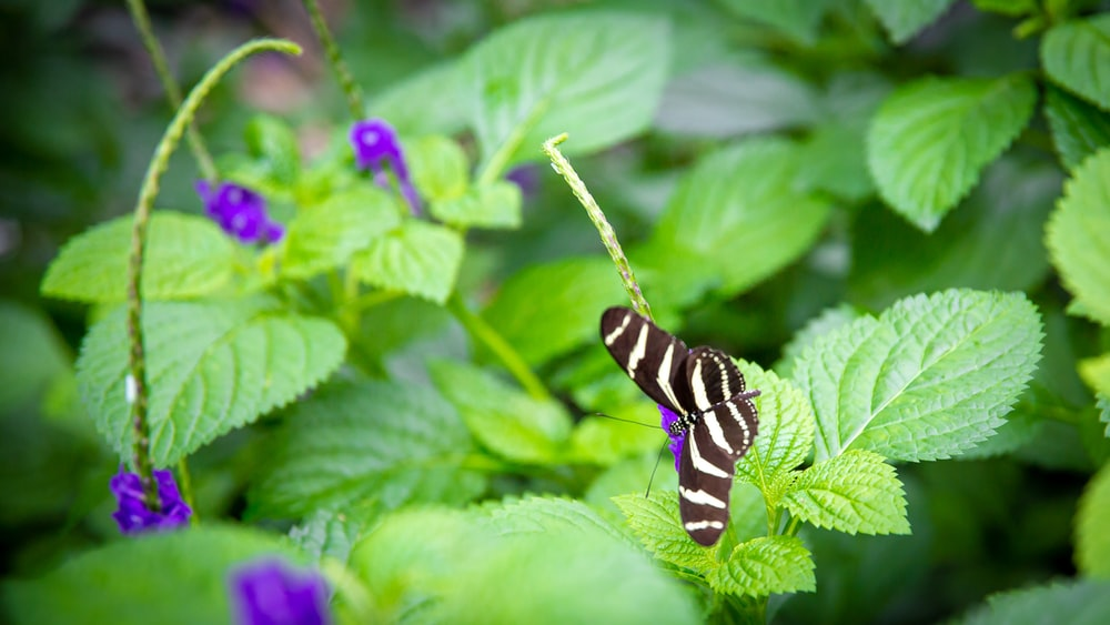 black and white butterfly perched on green leaf during daytime
