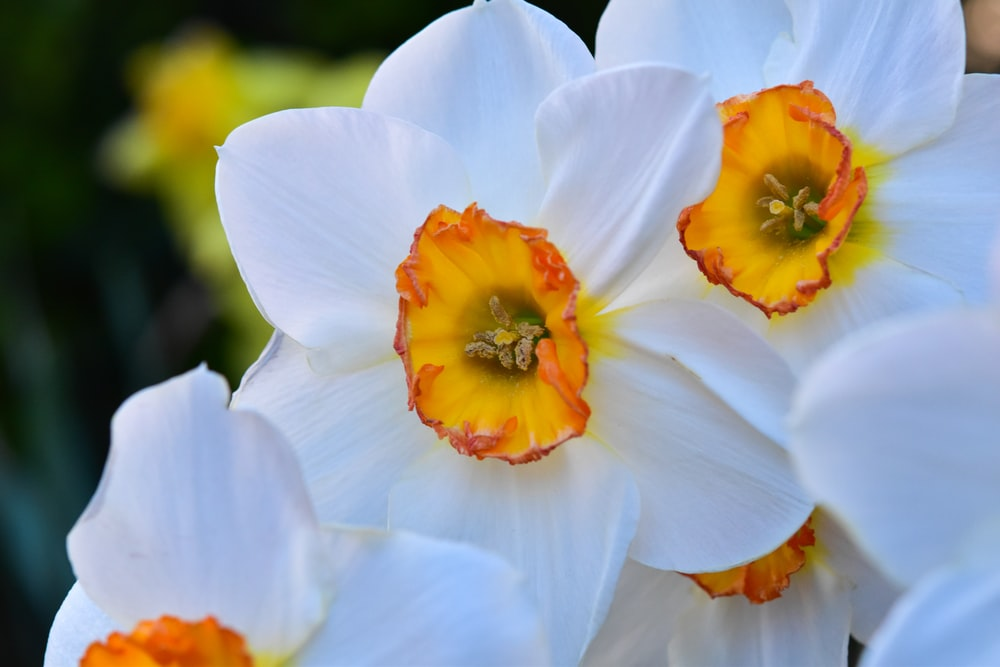 white and orange flower in macro shot