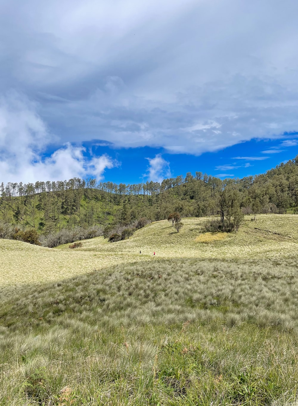 green trees on hill under blue sky and white clouds during daytime