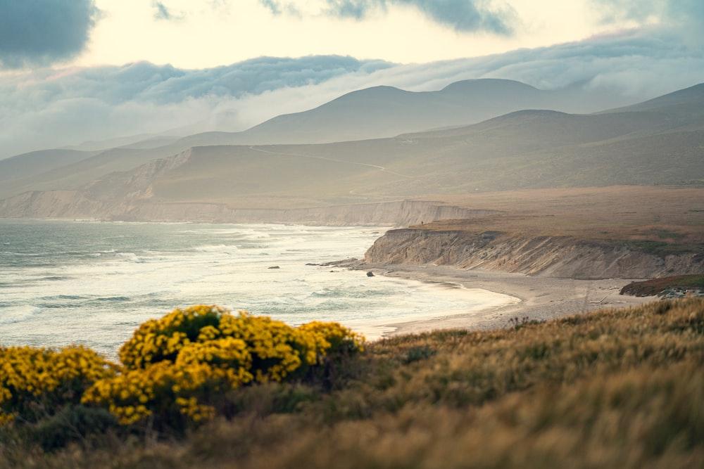 yellow flowers on seashore during daytime