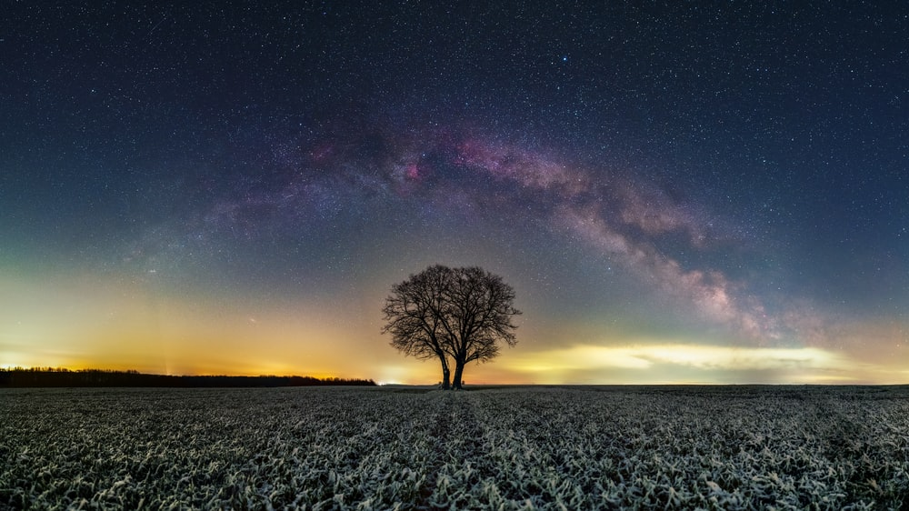 bare tree on green grass field under blue sky with stars during night time