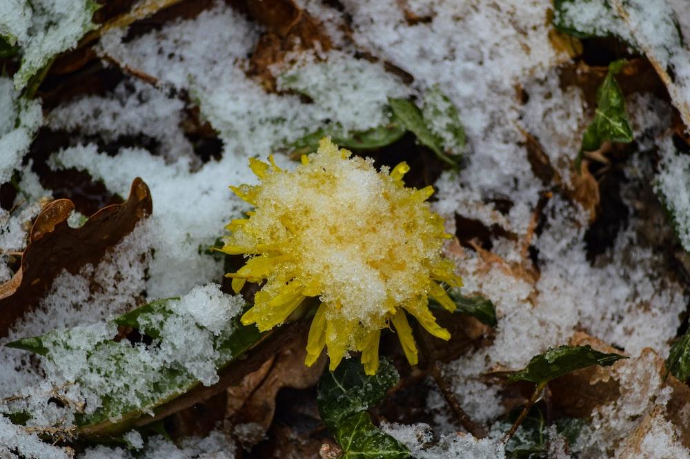 yellow flower on brown soil