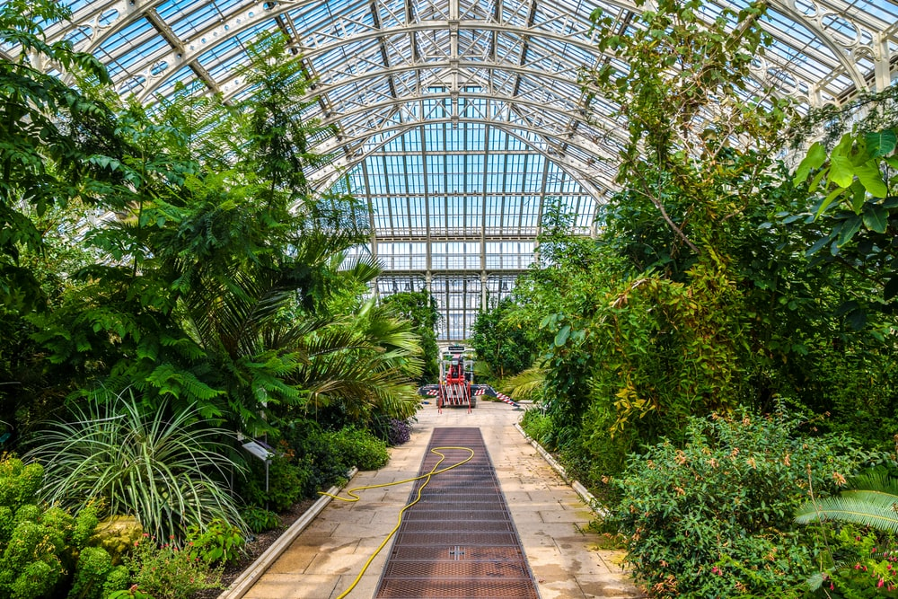 green trees inside greenhouse during daytime
