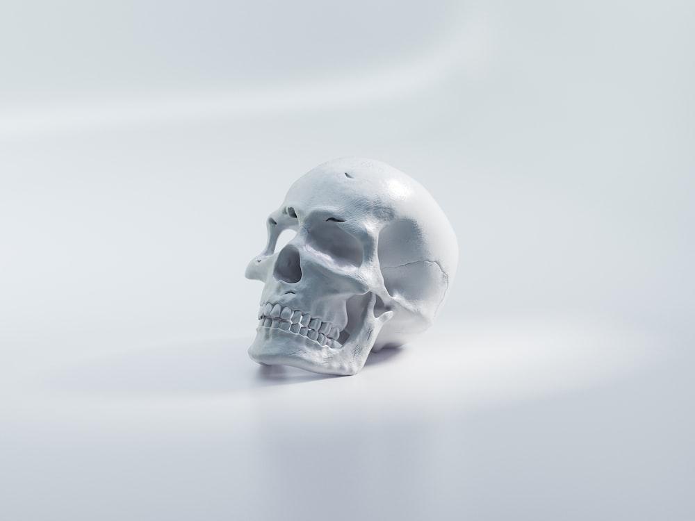 white skull on white surface