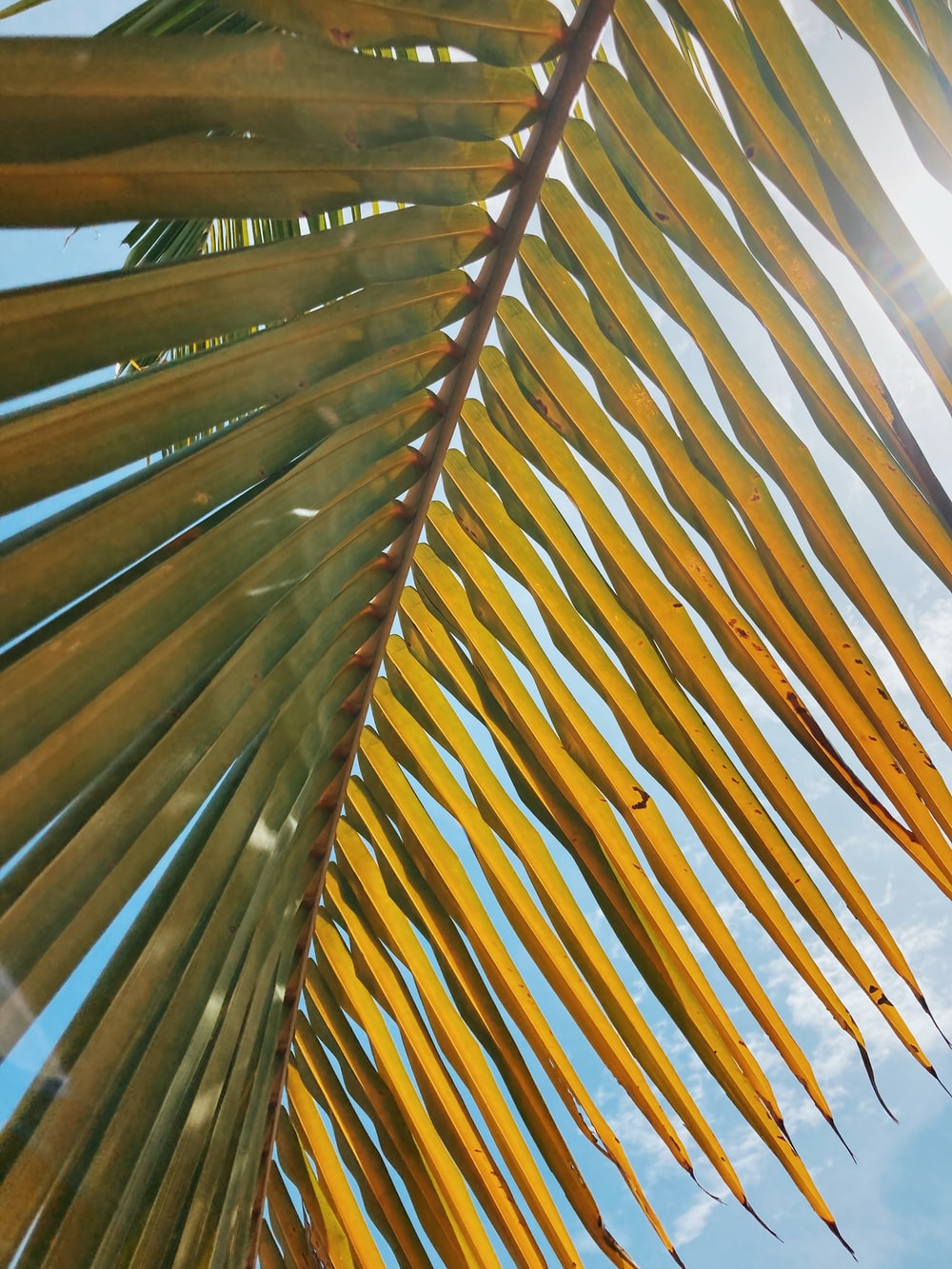brown coconut tree during daytime