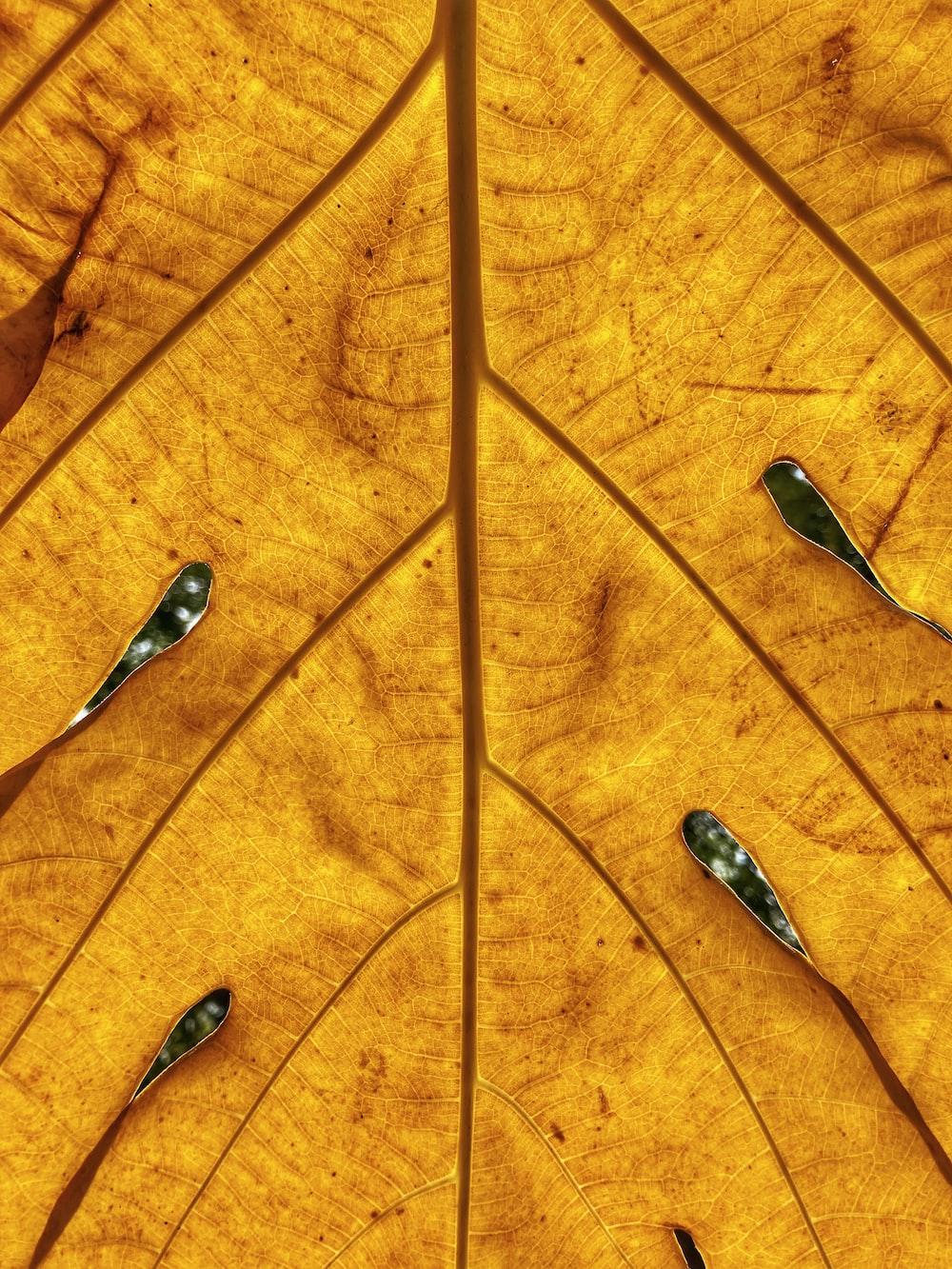 water droplets on orange leaf