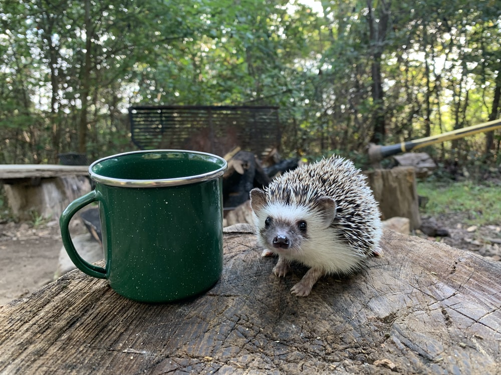 white hedgehog on green ceramic mug