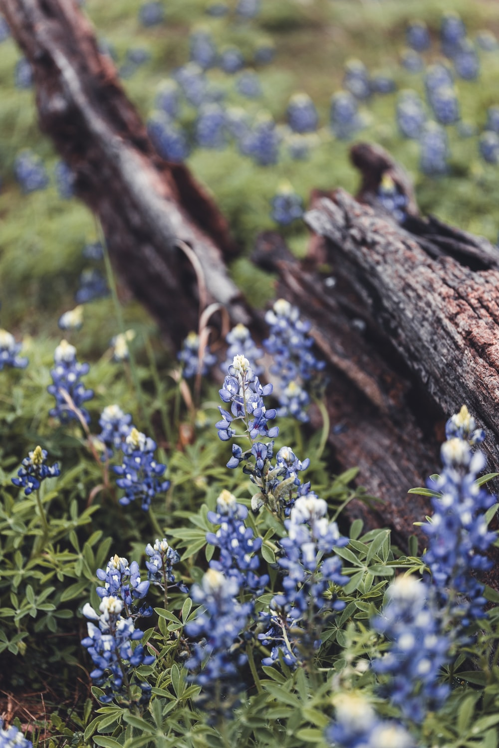 blue flowers on brown tree trunk