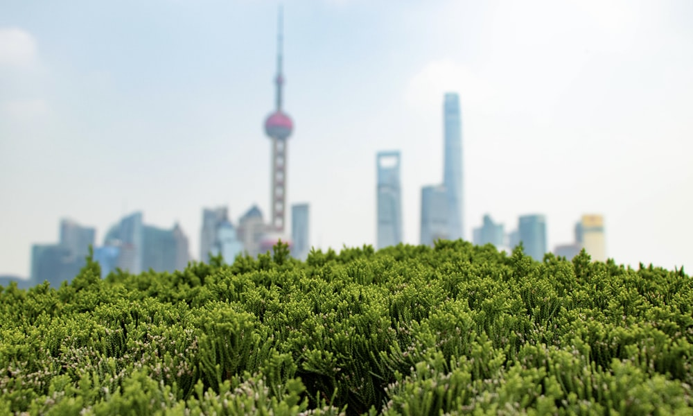 green plant near city buildings during daytime