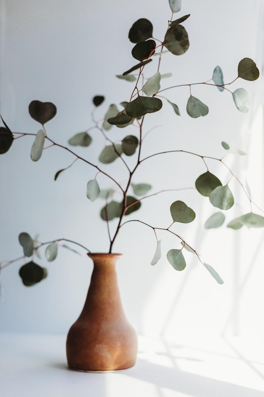 green plant on brown ceramic vase