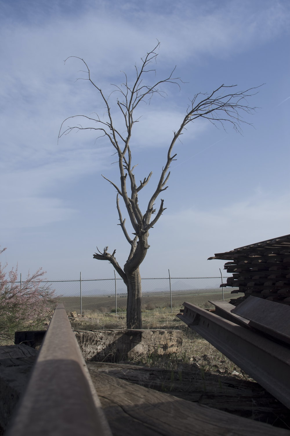 bare tree near brown wooden fence during daytime