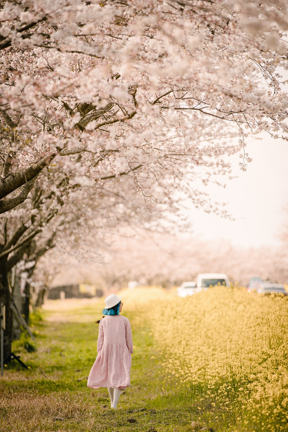 woman in blue hijab standing beside brown tree during daytime