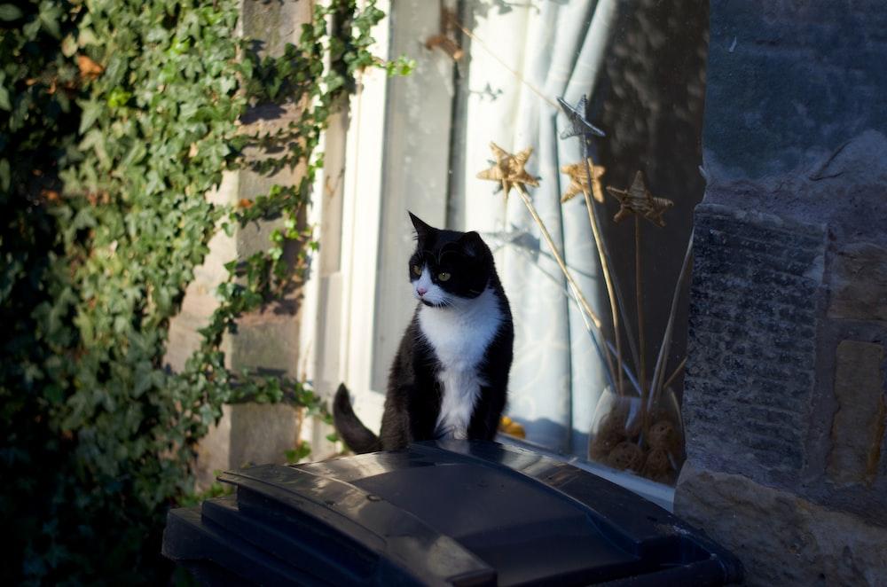 tuxedo cat on black plastic container