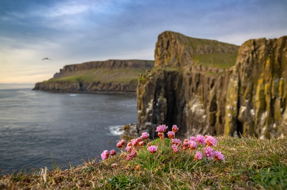 pink flowers beside brown rock formation near body of water during daytime