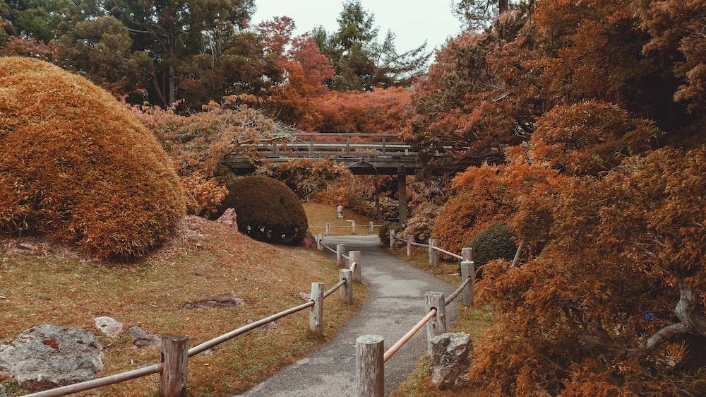 gray concrete bridge surrounded by trees