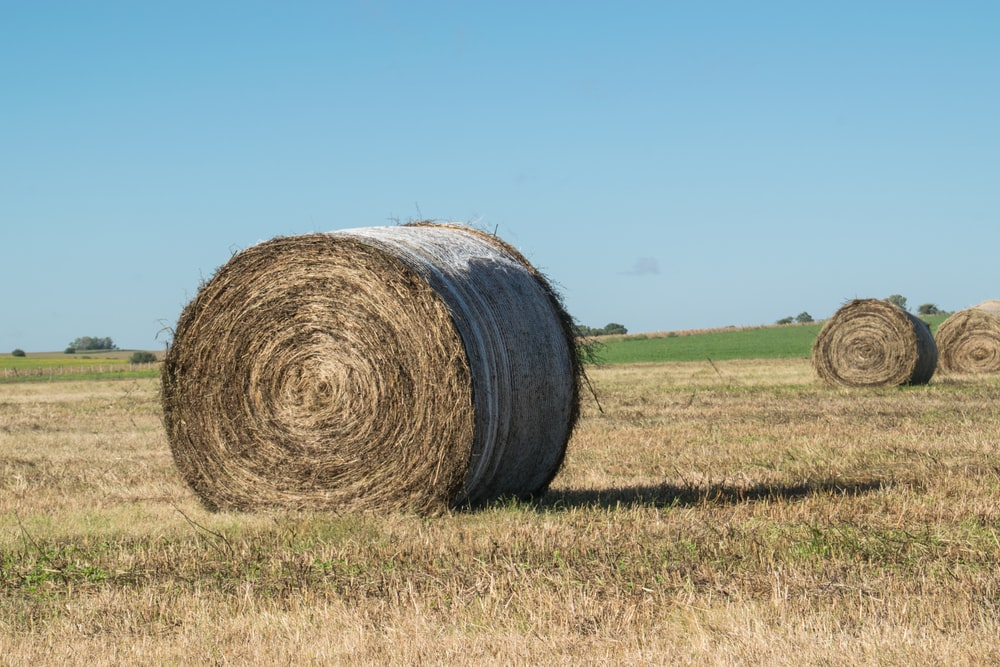 brown rolled hays on green grass field under blue sky during daytime