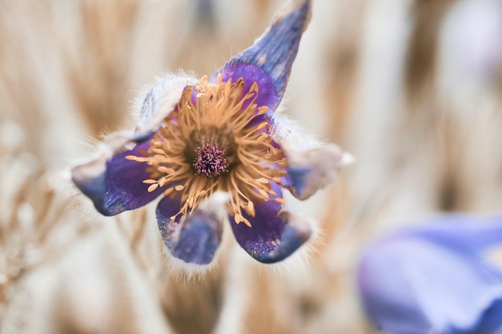 purple and yellow flower in tilt shift lens