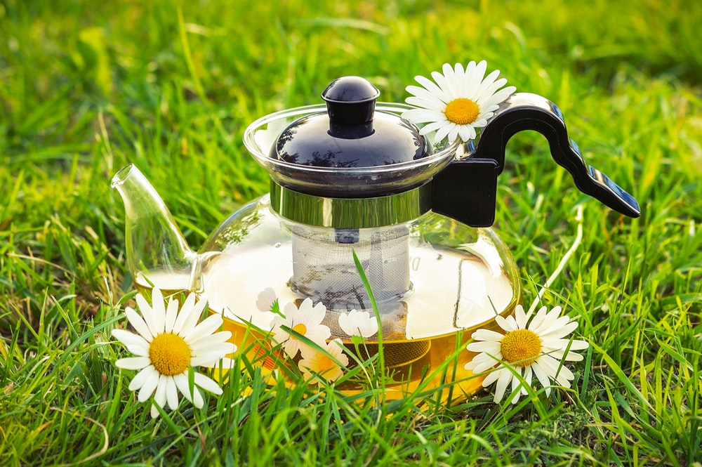 white daisy flowers in clear glass teapot on green grass field during daytime
