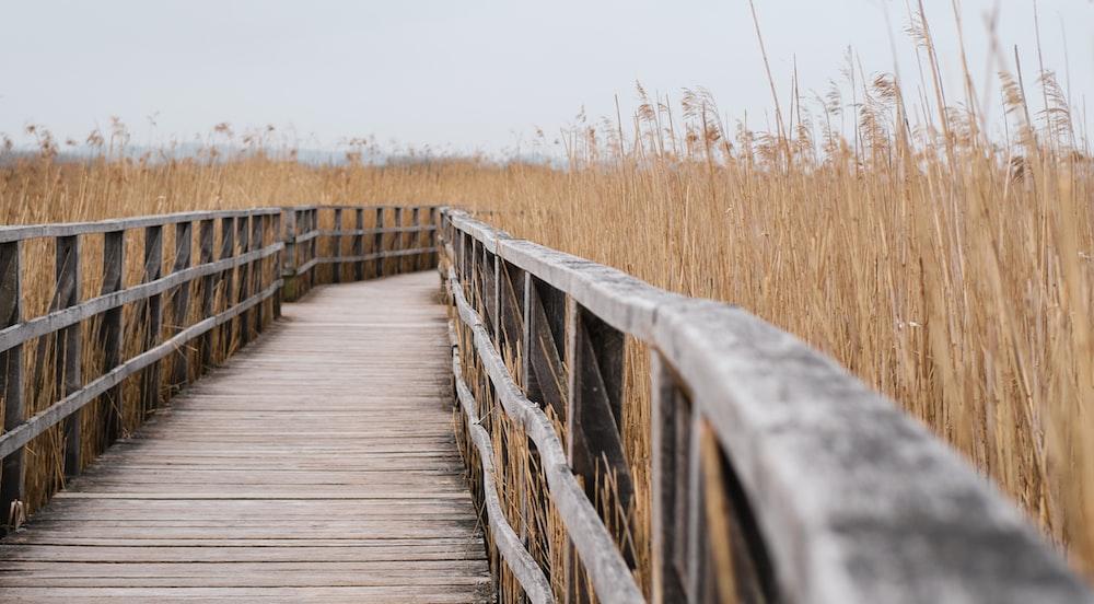 brown wooden bridge in between brown grass field during daytime