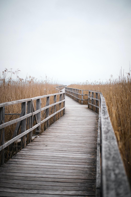 brown wooden bridge between brown grass field during daytime