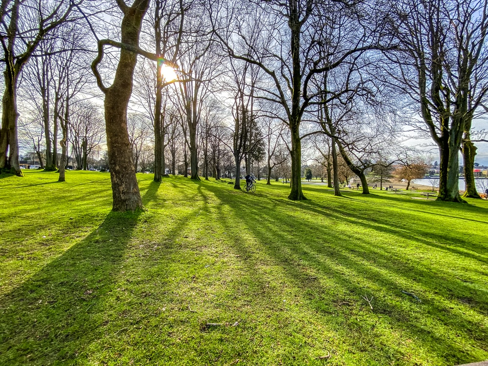 green grass field with bare trees during daytime