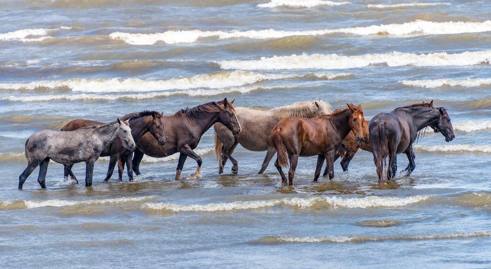 three brown horses on seashore during daytime