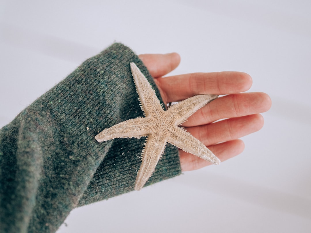 Person Holding Green and White Star Textile - unsplash