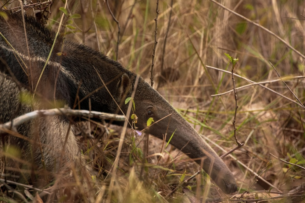 black and gray dragon on brown grass